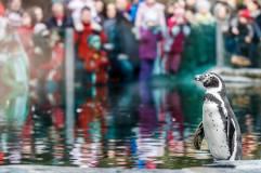 Pinguino Zoo di Praga
